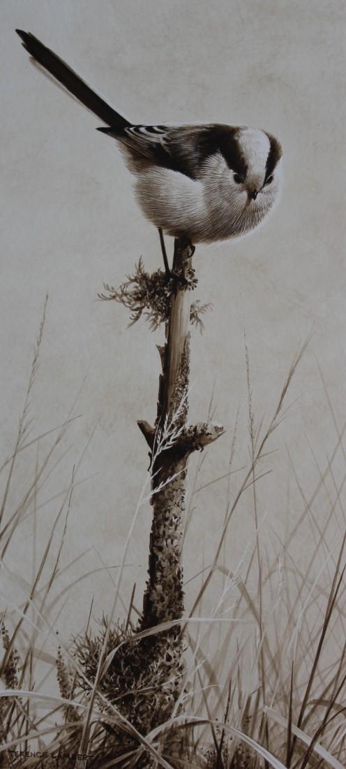 Long tailed tit Image