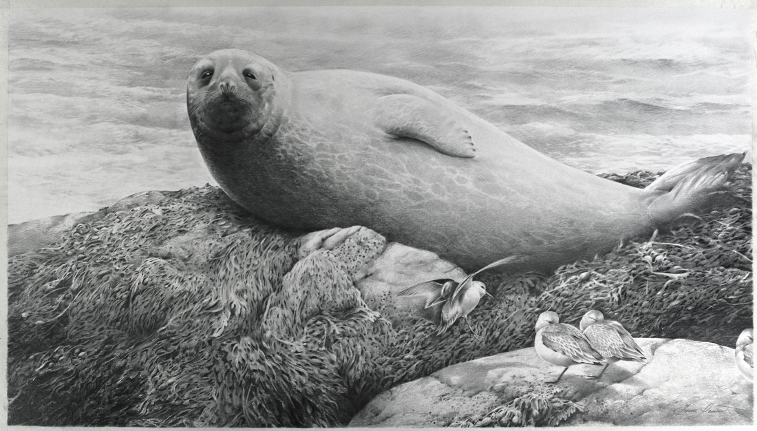 Common seal and sanderlings Image