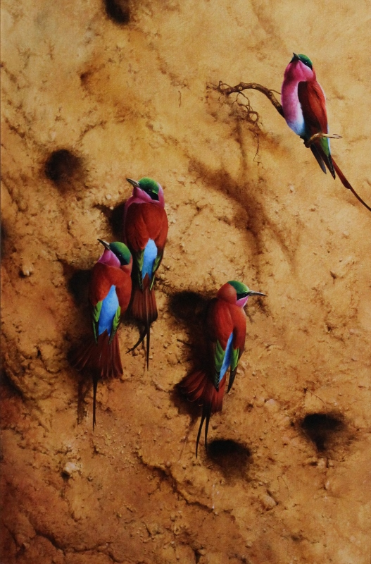 Carmine bee eaters Image