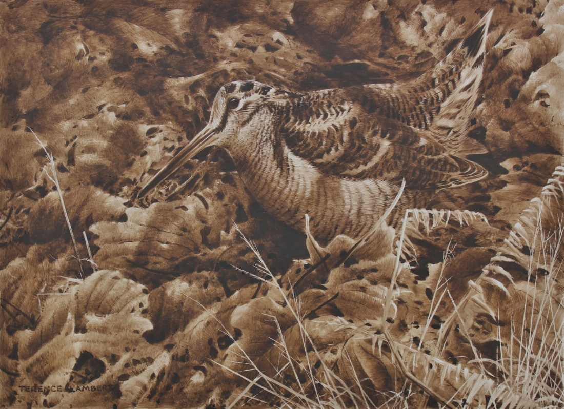 Woodcock Image