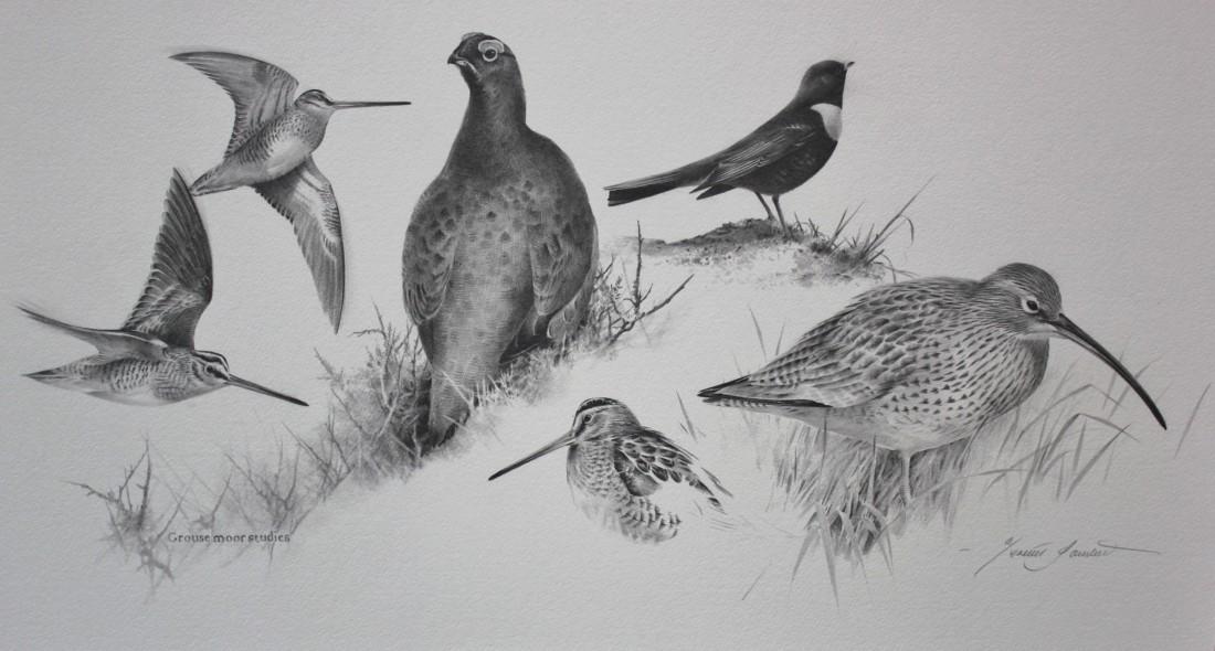Grouse moor studies Image