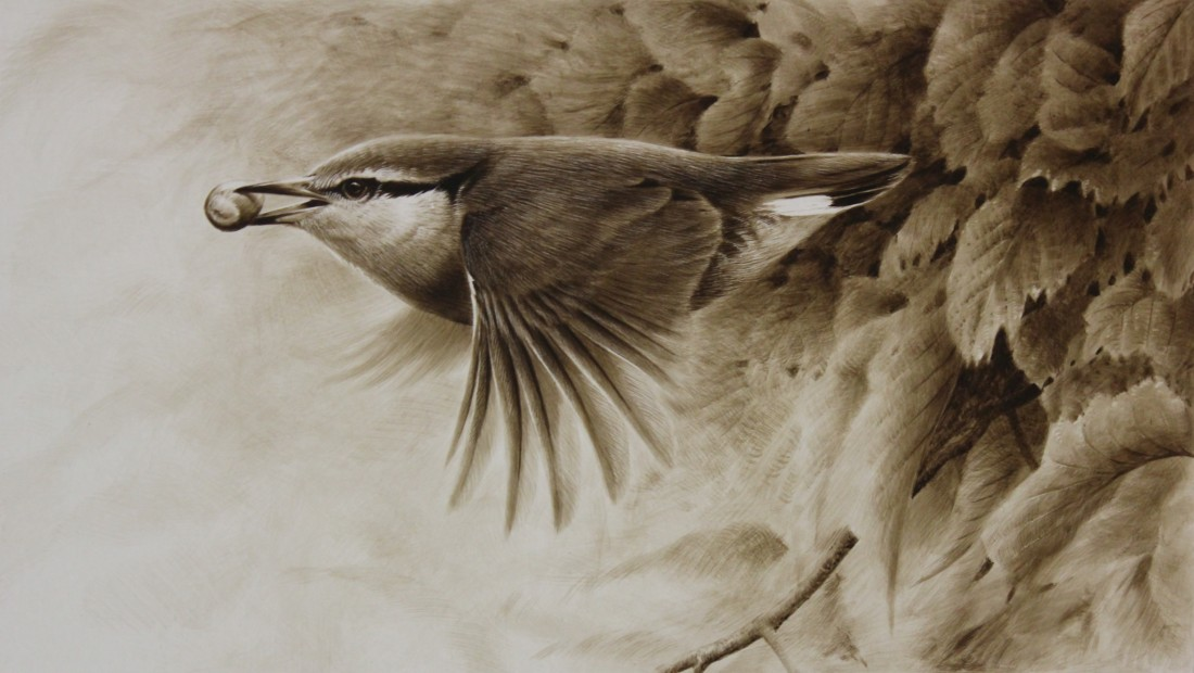Nuthatch Image