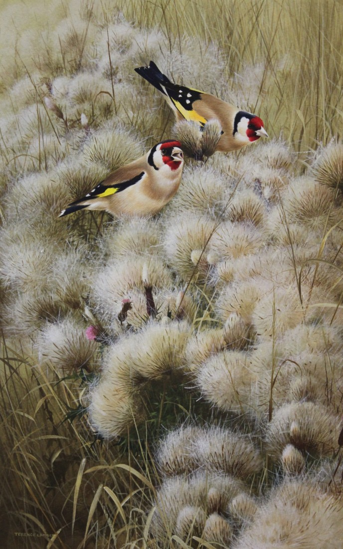 Goldfinches on thistledown Image