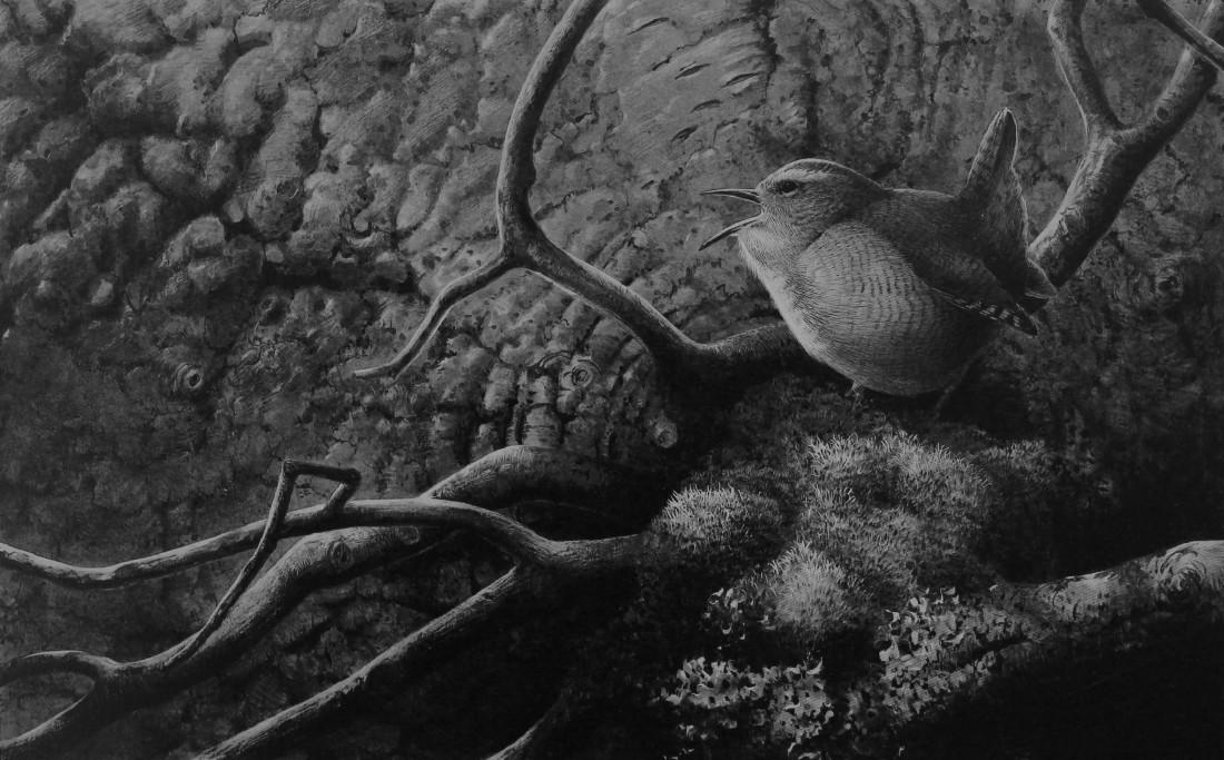 Wren spring song Image