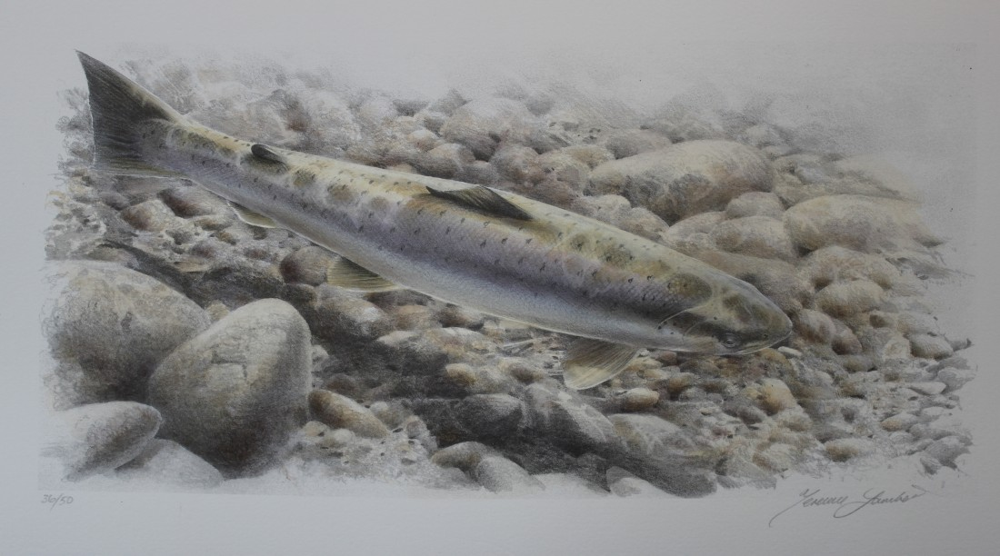 Sea trout Image