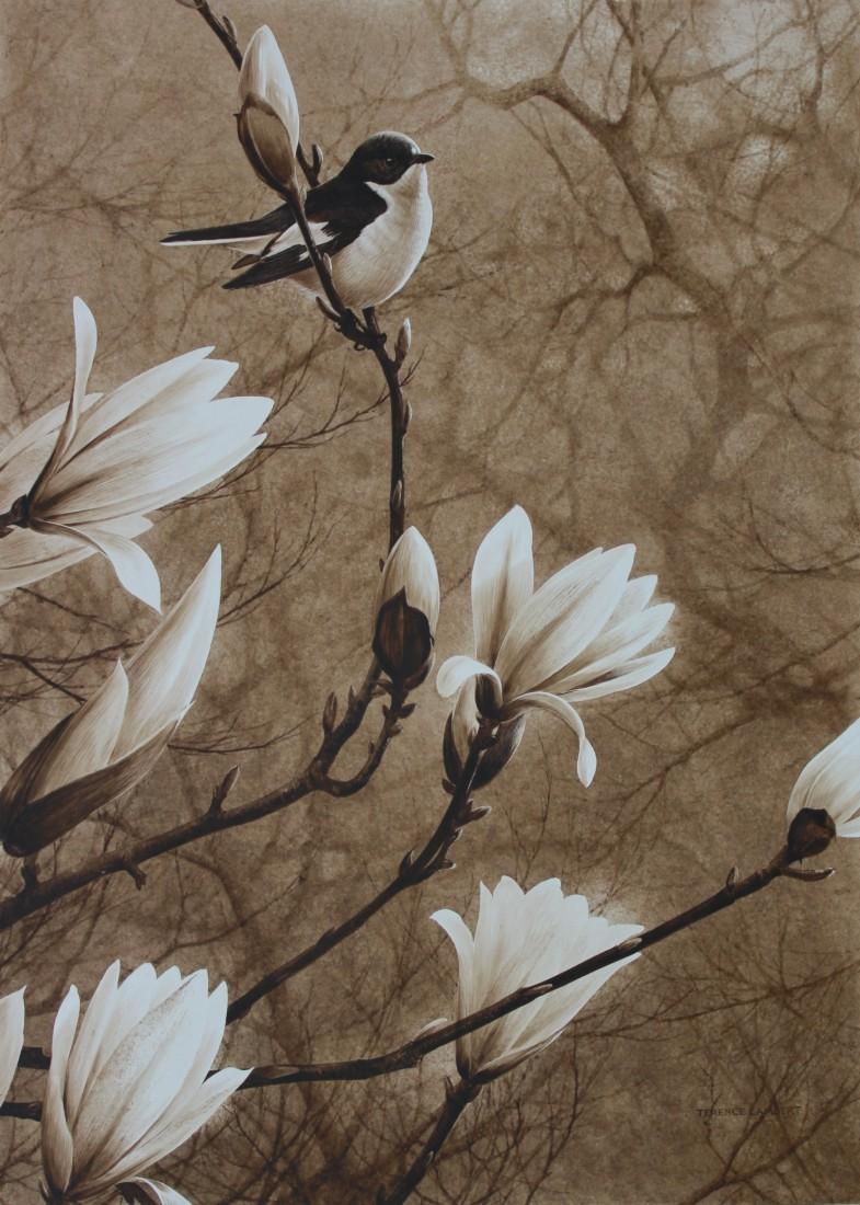 Magnolia Image