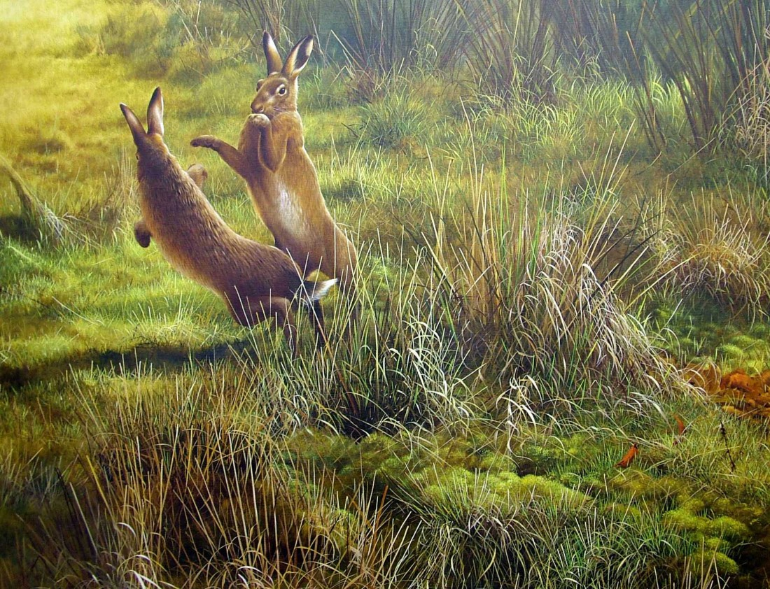 Spring Hares Image