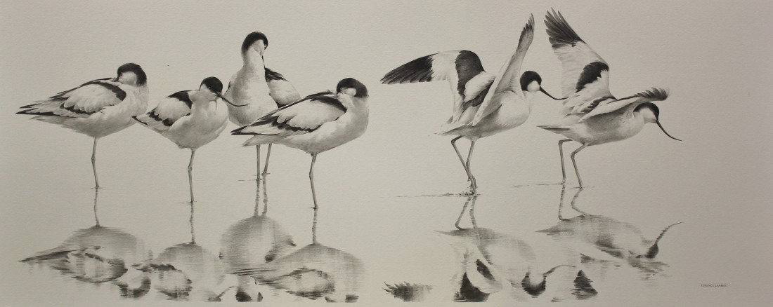 Avocets Image